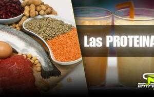 Nutrición Deportiva / Las Proteínas